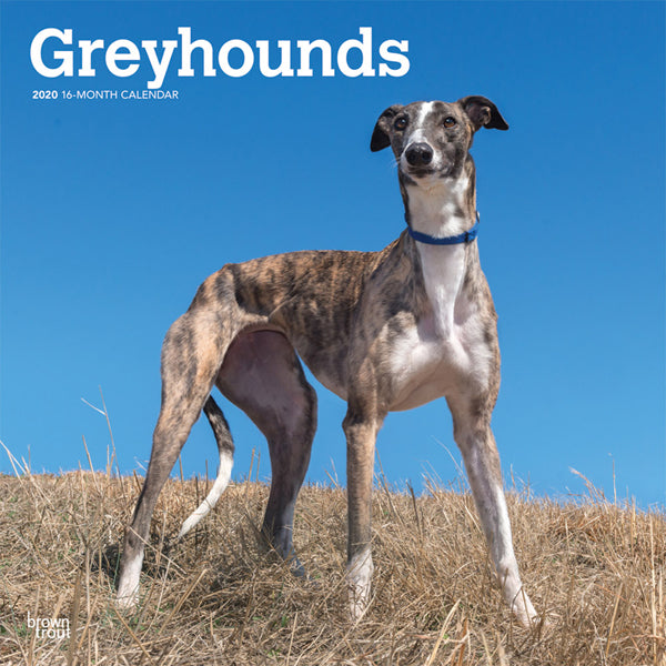 Greyhounds 2020 Wall Calendar