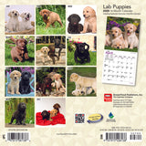Labrador Retriever Puppies 2020 Mini Wall Calendar