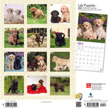 Labrador Retriever Puppies 2020 Wall Calendar