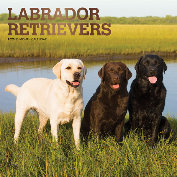 Labrador Retrievers 2020 Wall Calendar