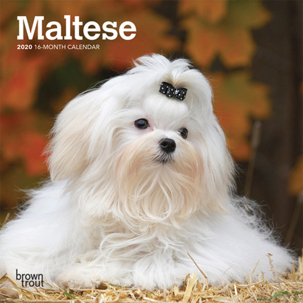 Maltese 2020 Mini Wall Calendar