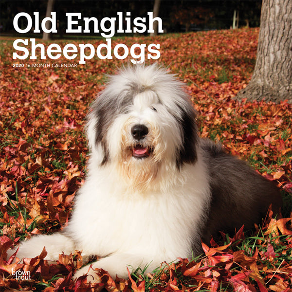 Old English Sheepdogs 2020 Wall Calendar