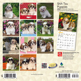 Shih Tzu Puppies 2020 Mini Wall Calendar