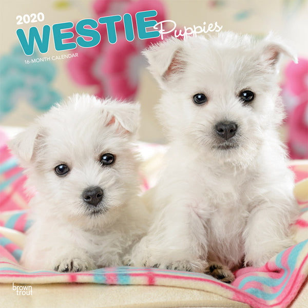 West Highland White Terrier Puppies 2020 Wall Calendar