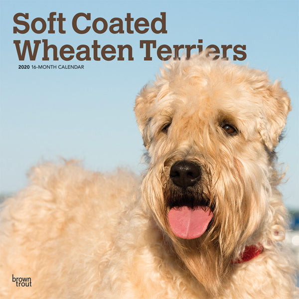 Soft Coated Wheaten Terriers 2020 Wall Calendar
