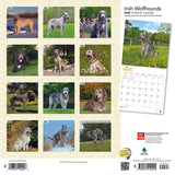 Irish Wolfhounds 2020 Wall Calendar