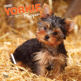 Yorkshire Terrier Puppies 2020 Wall Calendar