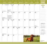 Dachshunds 2020 Monthly Pocket Planner