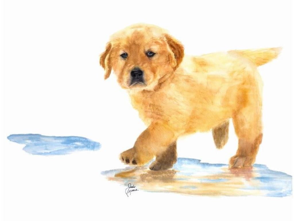 Puddles The Golden Retriever Stretched Canvas
