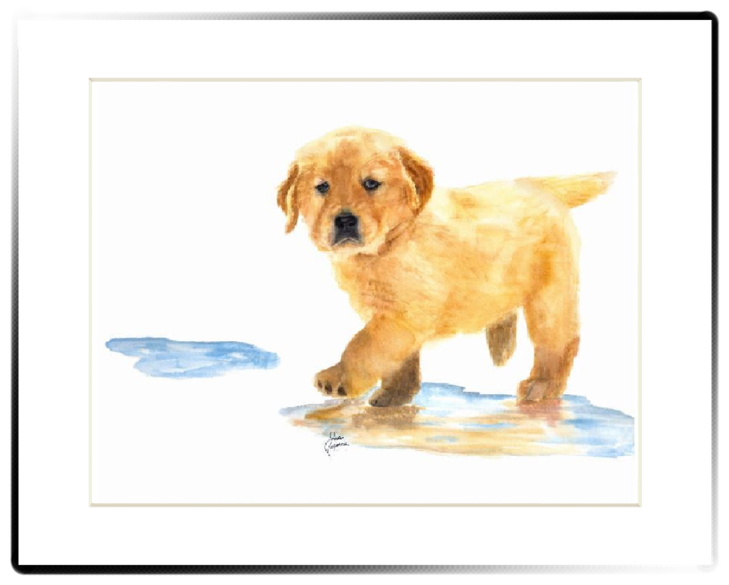 Puddles The Golden Retriever Matted Print