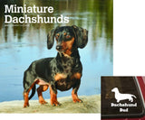 Miniature Dachshunds 2019 Calendar/Decal Set