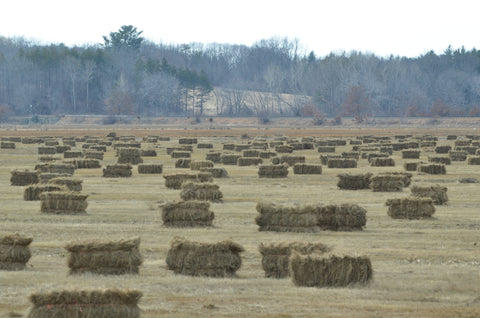Hay field New England