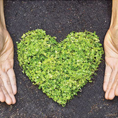 Plants that have grown in the shape of a heart