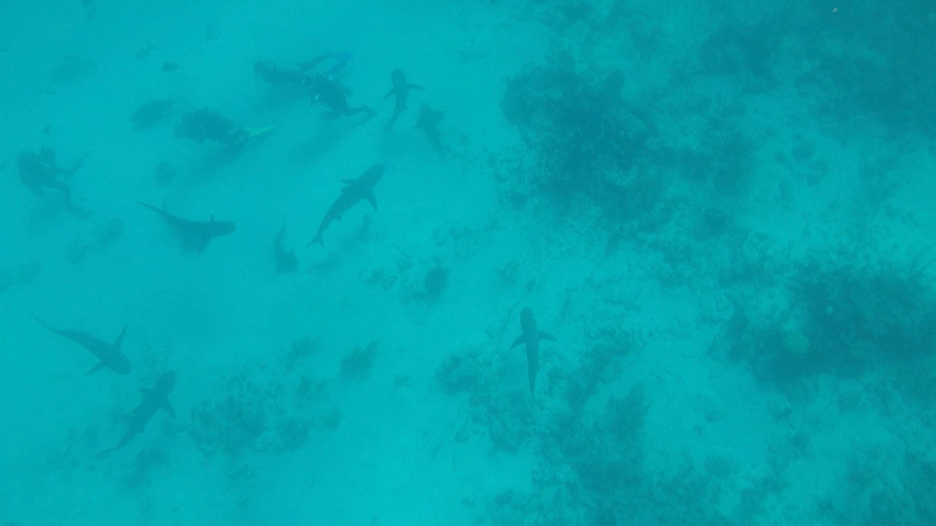 OMNA Marine Tourniquet Shark Diving