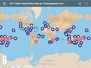 British Holiday Locations Have Increasing Shark Incidents