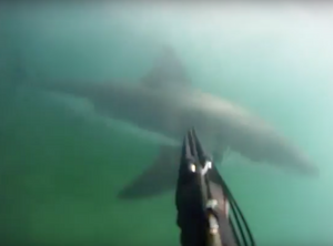 Guy Attacked by Shark While Spearfishing