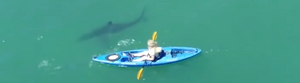 Kayakers, Sharks, California, & OMNA Tourniquets