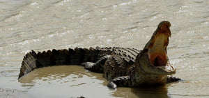 Crocodile Attack: British Tourist Killed in Sri Lanka near Popular Surfing Spot