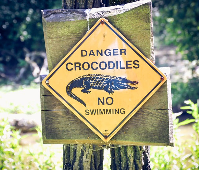 Crocodiles In The Florida Surf, Carry A Tourniquet