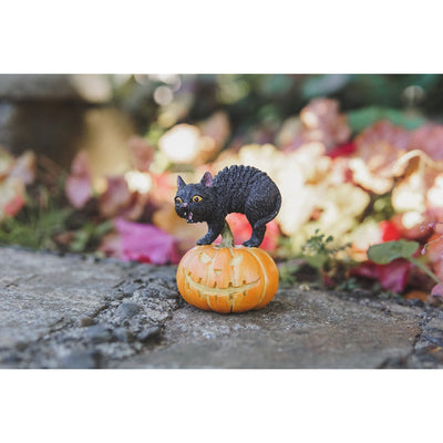Black Cat on Jack o' Lantern | Fairy Garden Animals - Australia | Earth Fairy
