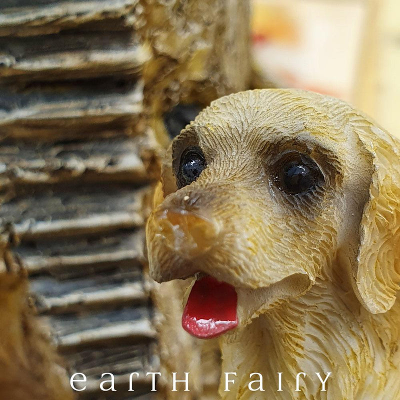 Golden Retriever - Sitting | Fairy Gardens - Australia | Earth Fairy