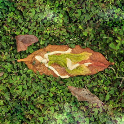 Leafy Fairy Sleeping on Leaf | Fairy Gifts & Decor - Australia | Earth Fairy
