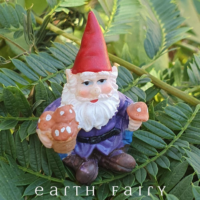 sitting miniature polyresin gnome, dressed in brown boots, blue pants, purple coat and red pointy hat, holding a pot of mushrooms