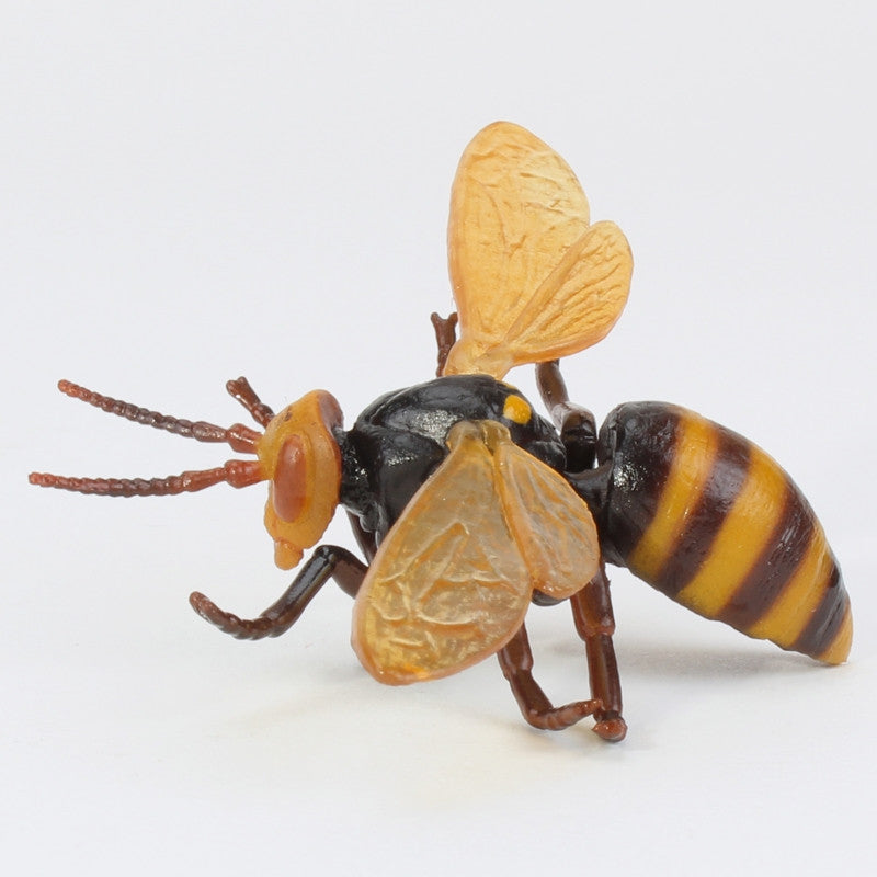 Realistic Insect Magnets - Single Blind Box