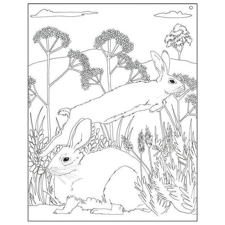 From the Sea to the Trees Coloring Book