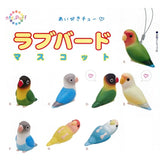 NTC Puff Lovebird - Random Assortment