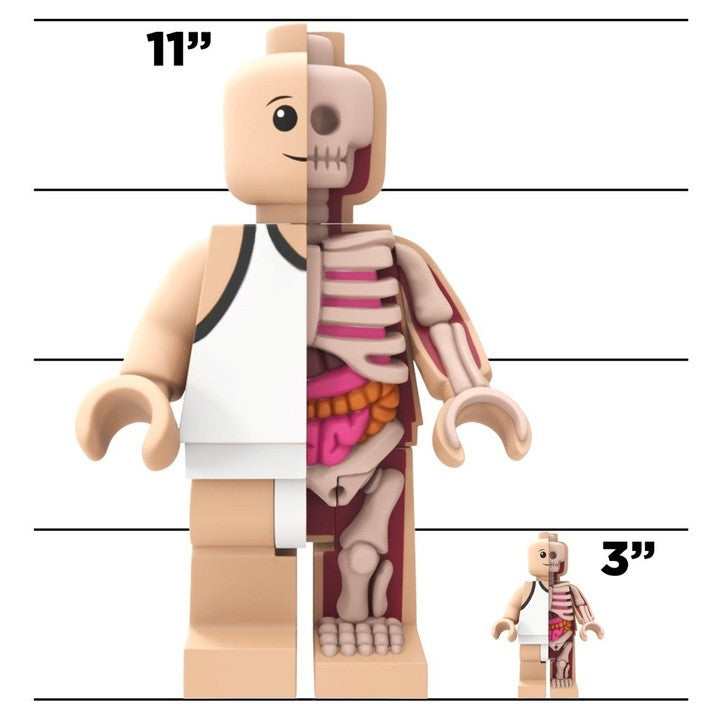 Jason Freeny's Bigger Micro Anatomic - Pre-Order