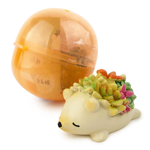 Botanical Hedgehogs Gashapon Capsule