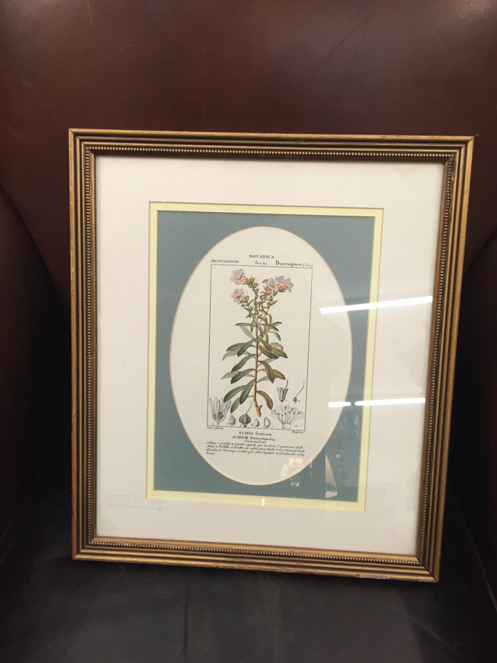 Framed Print - Botanica - Jarred's Homegoods / Treasure Brokers