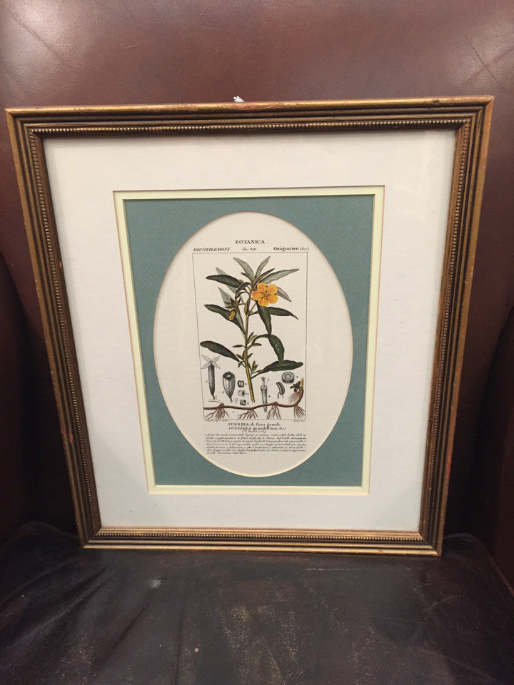 Framed Print - Botanical - Jarred's Homegoods / Treasure Brokers