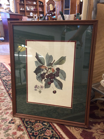 Framed Print of Cherries - Jarred's Homegoods / Treasure Brokers