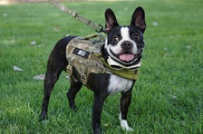 KILONINER COMPACT K9 TACTICAL MOLLE DOG VEST SMALL - Tactical Outfitters
