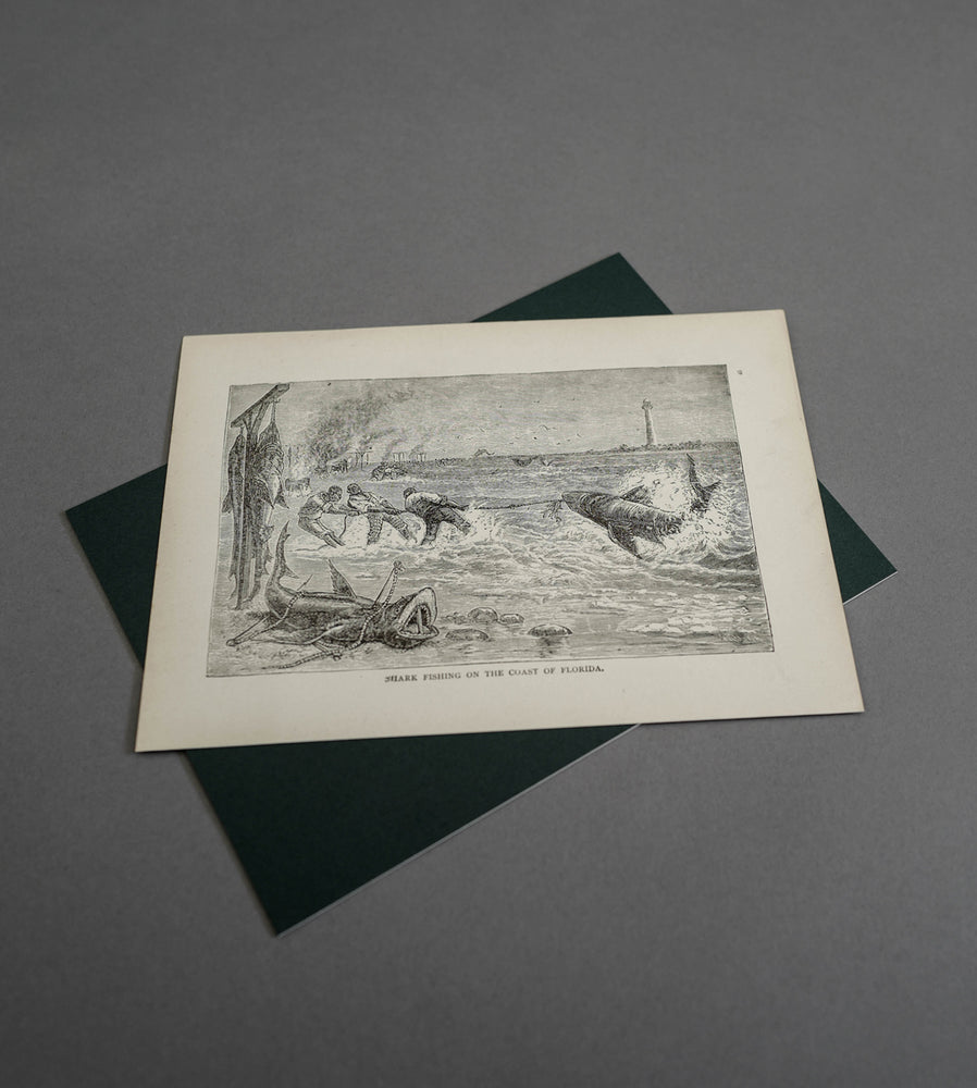 Load image into Gallery viewer, Fla Life 1892 - Vintage Print