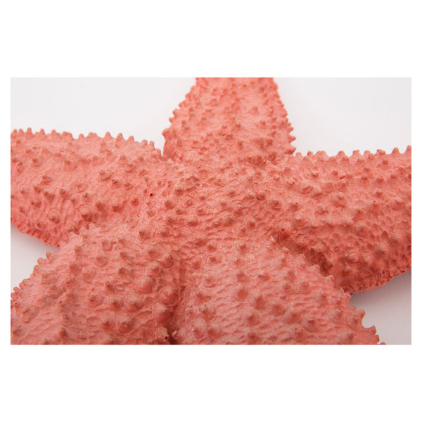 Batela Giftware--Giant Starfish