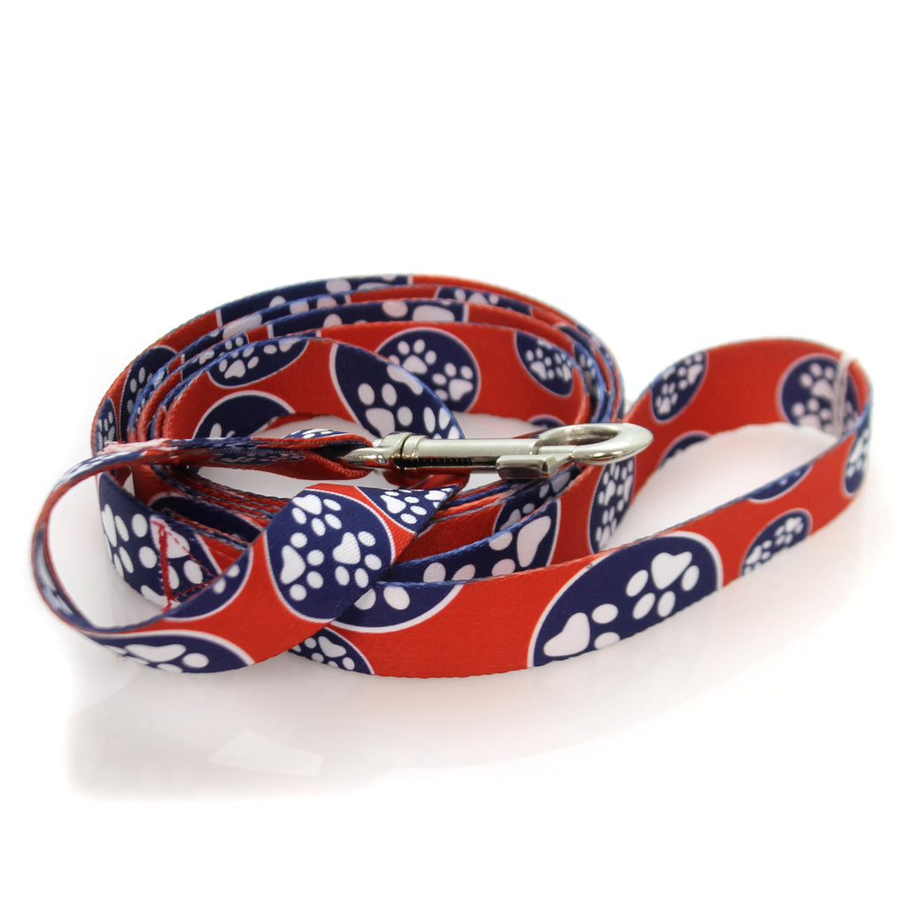 Animal Dog Leash Pet
