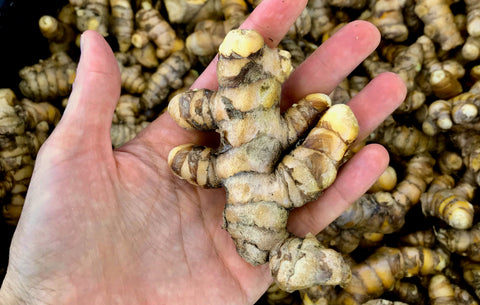 Fresh, Raw, Organic Turmeric