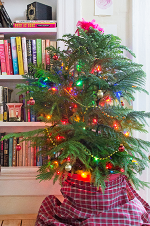Norfolk Island Pine, Image via Apartment Therapy | ALIGN : LEFT