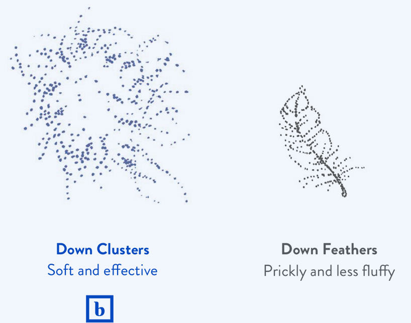 Illustration of down cluster and down feather