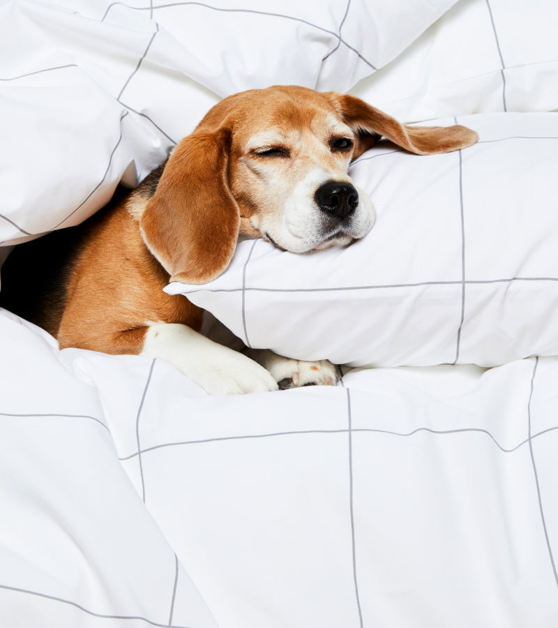 Cute dog napping in bed