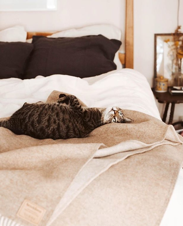 A cat relaxes on a cozy looking bed throw.