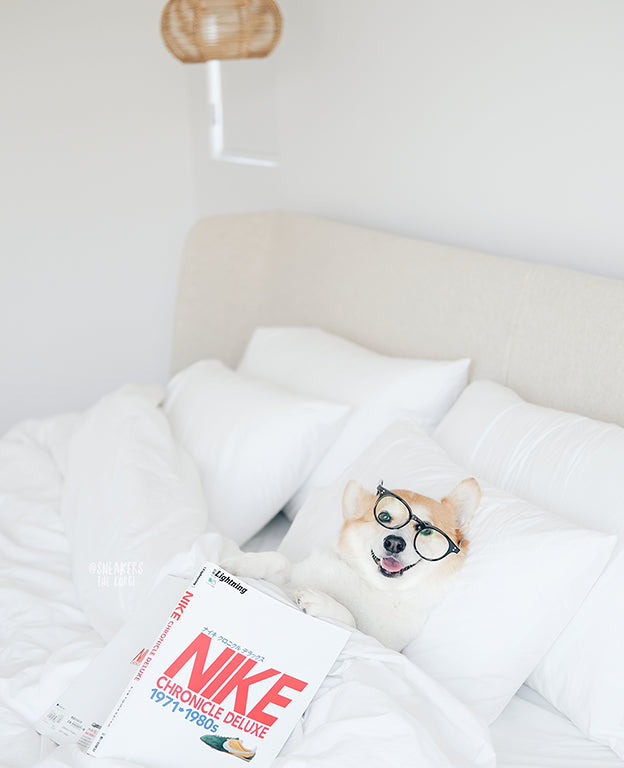 A really cute corgi reading a book in a bed with soft white bedsheets.