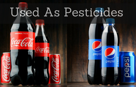 Using Pepsi and Coca-Cola For a Pesticide, Why Do People Still Drink This Stuff?
