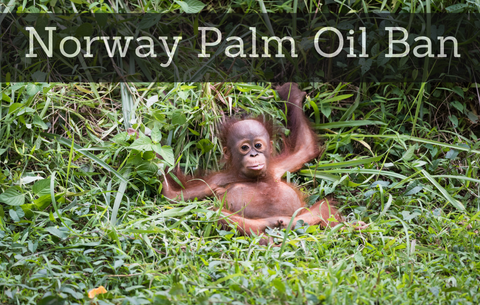 NORWAY FIRST COUNTRY TO BAN ALL PALM OIL BASED BIOFUEL FOR RAINFOREST PROTECTION