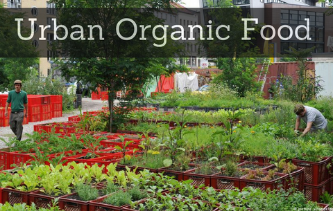 Transforming German cities into organic food gardens