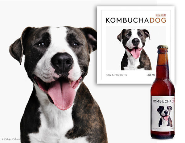 Kombucha Dog Raw, Probiotic, Organic Soft Drink is Available at Organic Soda Pops
