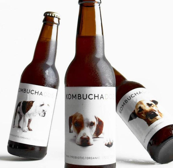 Kombucha Dog Organic Probiotic Soft Drink